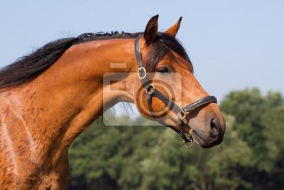 Porträt einer schönen Pferd