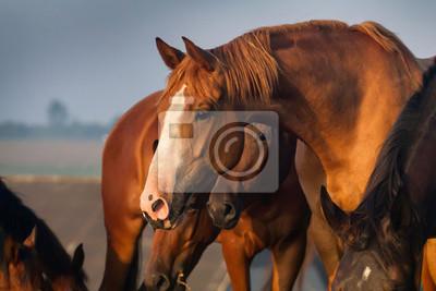 Porträt von roten Pferd in der Herde auf dem Bauernhof