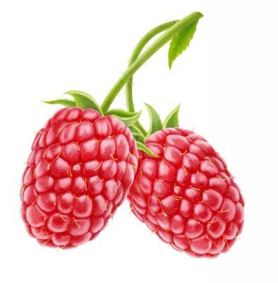 Sticker Raspberries on white background