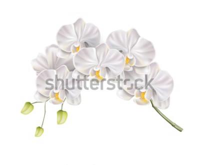 Sticker Realistische weiße Orchideenblumenniederlassung mit den Knospen auf Stamm. Elegante Hochzeitseinladung, Badekurortsalon-Dekorationsdesign. Vektorheirat-Einladungskarte, romantisches Ereigniselement. F