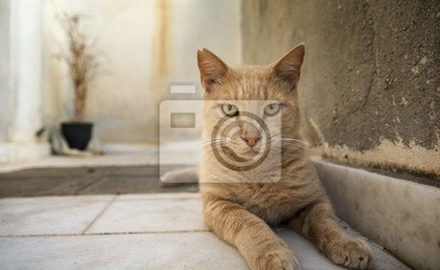 Red cat on greek island