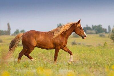 Sticker Red Pferd mit langen Mähne