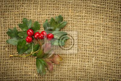 Red Weißdorn Beeren im Herbst