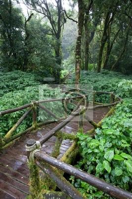 regen-Waldweg