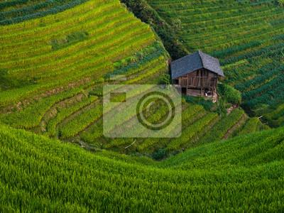 Sticker Reis-Terrassen
