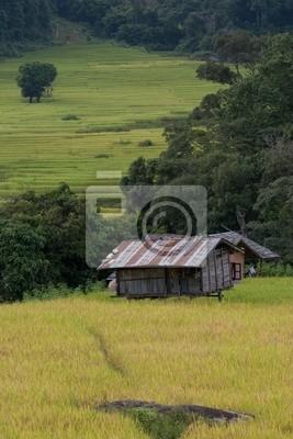 Reisfeld mit 2 Hütte