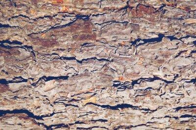 Rinde der Kiefer. Texture Baum oder Kiefer in den Wald. Hintergrund der Baumrinde.