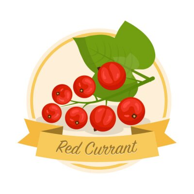 Ripe red currant with name vector illustration