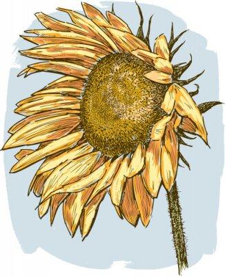 Sticker ripe sunflower