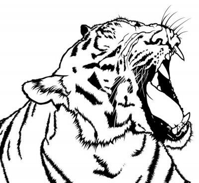 Sticker Roaring Tiger - Schwarz-Weiß-Zeichnung Illustration, Vektor
