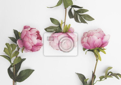 Rosa Blumen auf einem einfachen Hintergrund