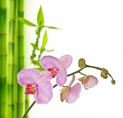 Sticker rosa Orchidee und Bambus - Spa-Hintergrund