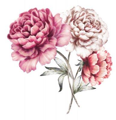 Sticker Rosa Pfingstrosen. Aquarellblumen. Blumenabbildung in den Pastellfarben. Bouquet von Blumen isoliert auf weißem Hintergrund.