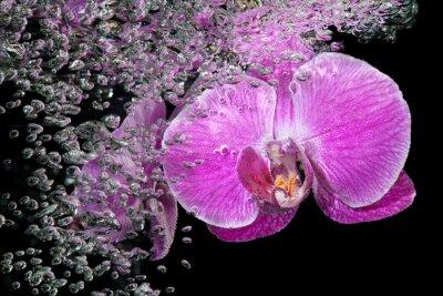 Sticker Rosa tropische Orchidee unter Wasser