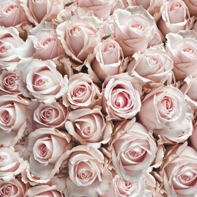 Sticker Rosa Weinleserosen