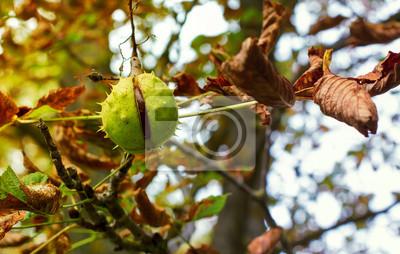 Rosskastanie Baum im Herbst