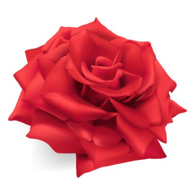 Sticker Rote Rose. Hand gezeichnet Vektor-Illustration einer roten Rose, die Königin der Rosen, Symbol der Liebe, Mut, Mitgefühl.