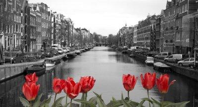 Sticker rote Tulpen in Amsterdam