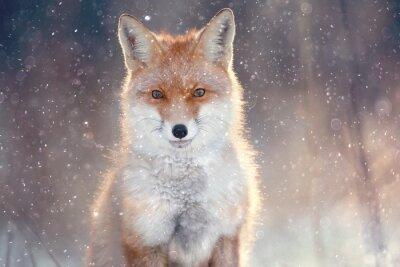 Sticker Roten Fuchs im Winterwald Pretty
