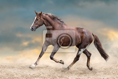 Rotes Pferd läuft in Wüstenstaub gegen blauen Himmel
