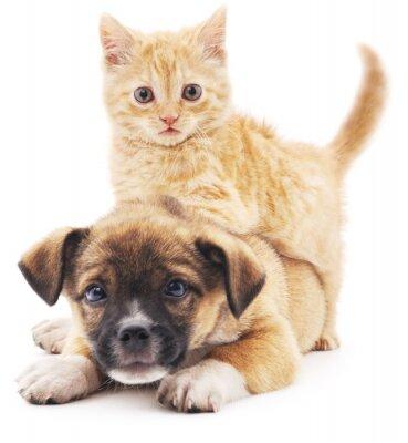 Sticker Rred Kätzchen im Welpen.