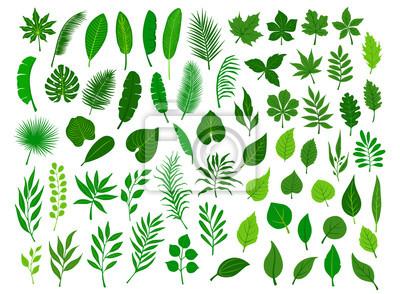 Sticker Sammlungssatz von unterschiedlichem grünem tropischem, Wald, Parkbaum verlässt Zweigzweige Pflanzenlaubkräuter