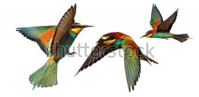 Sticker Satz Farbvögel im Flug lokalisiert auf einem weißen Hintergrund