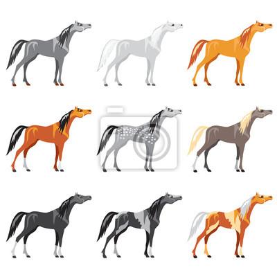Satz von Pferden