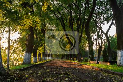 Schatten der Bäume im Frühherbst