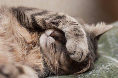 Sticker schlafende Katze