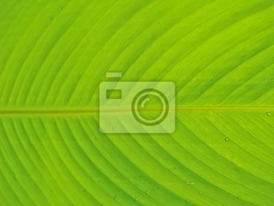 Schließen Sie bis zu grünem Blatt