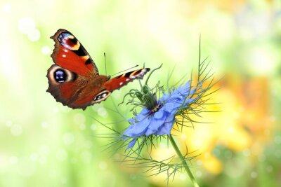 Sticker Schmetterling 198