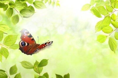 Sticker Schmetterling 204