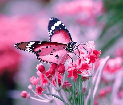 Sticker Schmetterling auf orange Blume