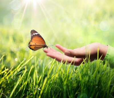 Sticker Schmetterling in der Hand auf Gras