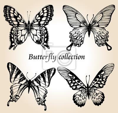 Schmetterling Satz. Insekt Skizze Sammlung für Design und Scrapbooking, Vektor Hand gezeichnete Illustration, Silhouette, isoliert