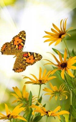 Sticker Schmetterling und Blumen im Garten Nahaufnahme