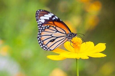 Sticker Schmetterlinge und Blumen