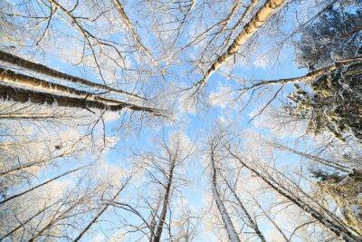 Sticker Schnee bedeckte Baumperspektiveansicht, die oben schaut