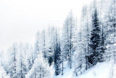 Sticker Schnee bedeckten Wald