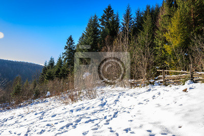 schneebedeckten Wald auf dem Hügel im Winter