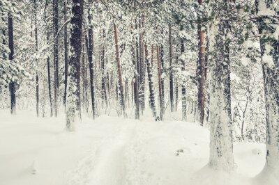 Sticker Schneefall im Winterwald.