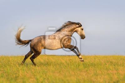 Schöne graue Pferd auf der Wiese