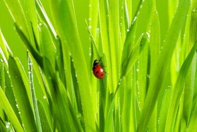 Sticker schöne Marienkäfer auf dem grünen Gras