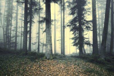 Sticker Schöne nebligen Wald Baum Märchen. Magic nebligen Licht im Wald.