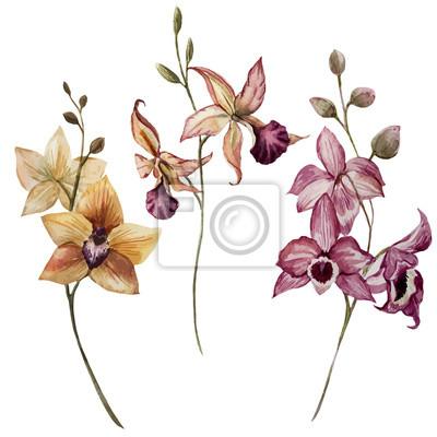 Schöne Orchidee Blume