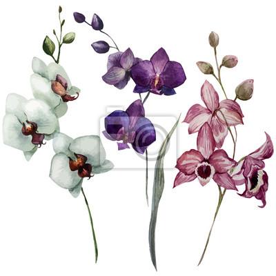 Schöne Orchidee flower3