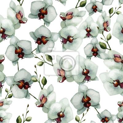 Schöne Orchidee Flower6