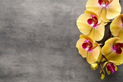 Sticker Schöne rosa Orchidee auf einem grauen Hintergrund.