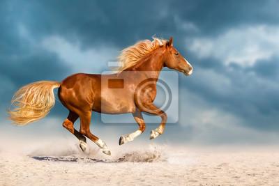 Schöne rote Pferd laufen schnell in Sand gegen dramatischen Himmel